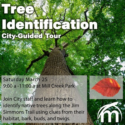 Photo of Tree ID event information