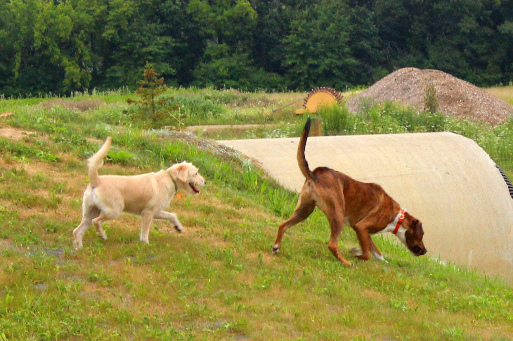 Photo of dogs exploring new dog park