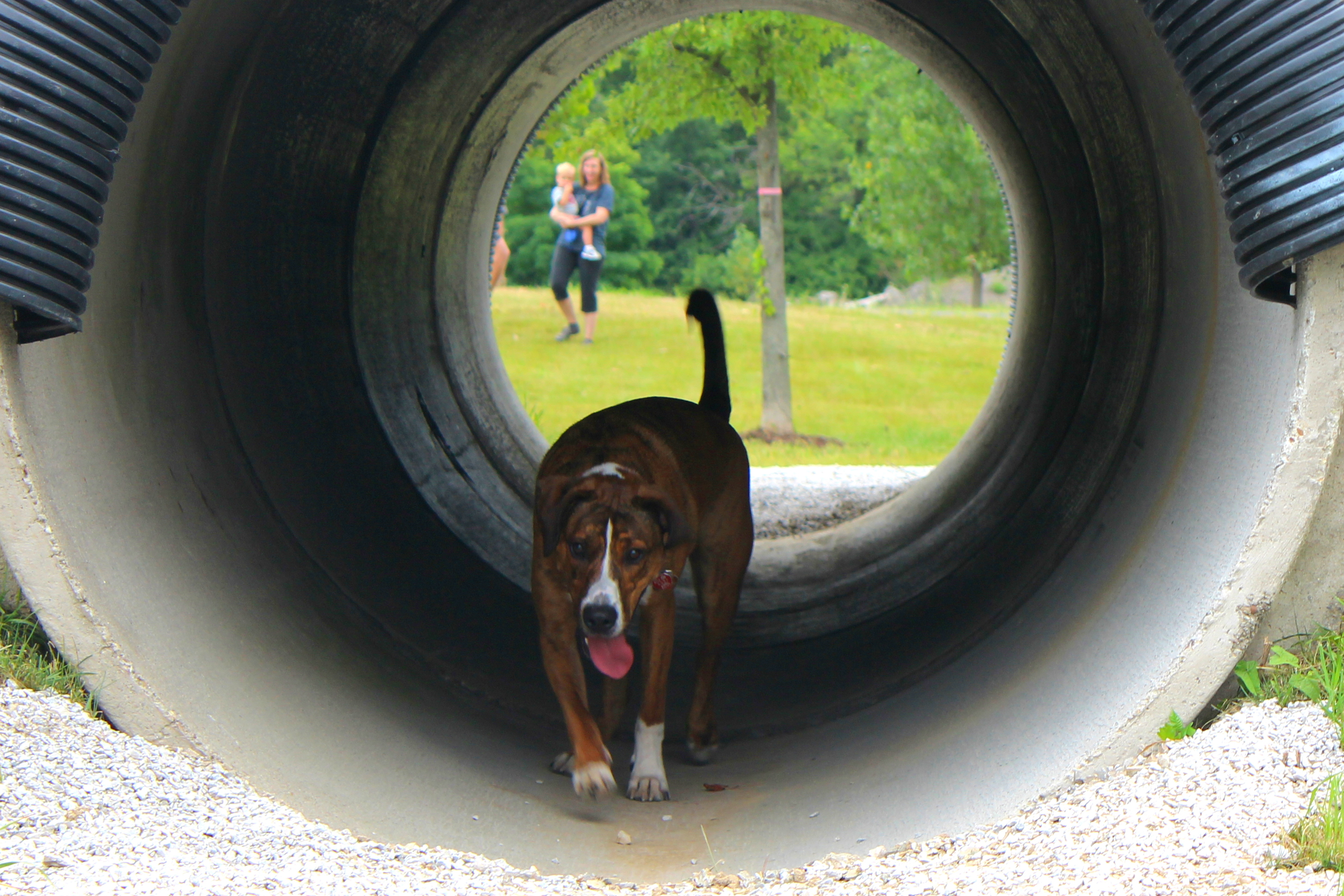 Photo of dog walking through tunnel at new dog park
