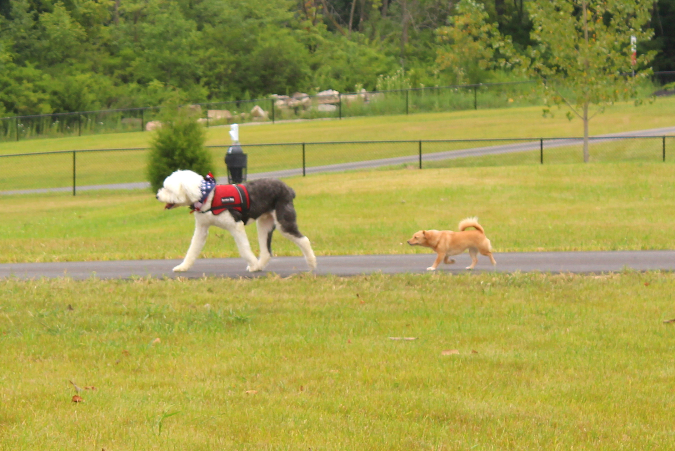 Photo of dogs walking along the trail in the dog park